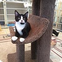 Adopt A Pet :: ROSS - Hamilton, NJ