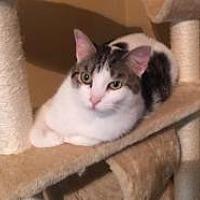 Adopt A Pet :: Dallas - Sedalia, MO