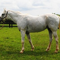 Arabian Mix for adoption in Lovettsville, Virginia - Ivy