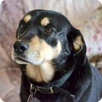 Adopt A Pet :: Sage - Aurora, IL