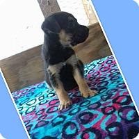 Adopt A Pet :: Roy - LAKEWOOD, CA
