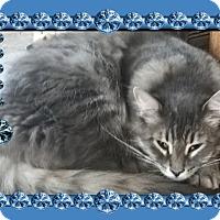 Adopt A Pet :: Fluffer - london, ON