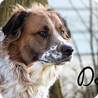 Adopt A Pet :: DJ - Joliet, IL