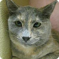 Adopt A Pet :: Buttons - Battle Ground, WA
