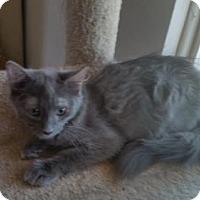 Adopt A Pet :: Moscato - Glendale, AZ