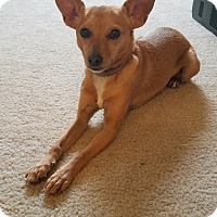 Adopt A Pet :: Tonks - Alexandria, VA