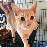 Adopt A Pet :: Blaze - Cocoa, FL