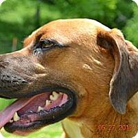 Adopt A Pet :: Leo - Bakersville, NC