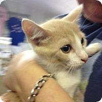 Adopt A Pet :: Boca - Winter Haven, FL