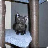 Adopt A Pet :: Ebony - Milwaukee, WI