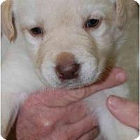 Adopt A Pet :: LANDON - Houston, TX