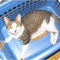 Adopt A Pet :: MAXWELL (DH) - Little Falls, NJ