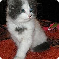 Adopt A Pet :: Wynk'n - Dallas, TX