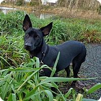 Adopt A Pet :: Holly - Surrey, BC