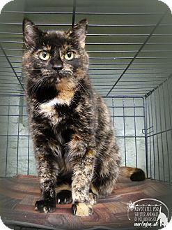 Domestic Shorthair Cat for adoption in Marlinton, West Virginia - Speckles--RESCUED!