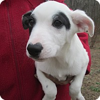 Adopt A Pet :: ETHAN - Lincolndale, NY