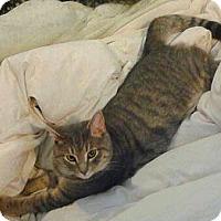 Adopt A Pet :: Victor - Philadelphia, PA