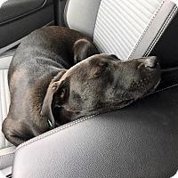 Adopt A Pet :: Fruti - Hearne, TX