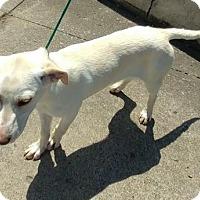 Adopt A Pet :: Taff - Cincinnati, OH
