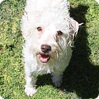 Adopt A Pet :: Tessa - Henderson, NV