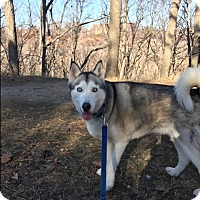 Adopt A Pet :: Charilee - Elyria, OH