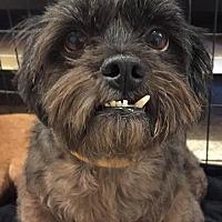 Adopt A Pet :: Gonzo - Bogalusa, LA