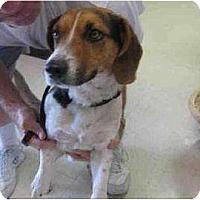 Adopt A Pet :: Roy - Phoenix, AZ