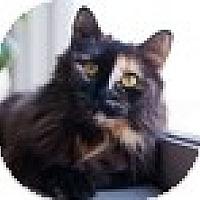 Adopt A Pet :: Delileh - Vancouver, BC