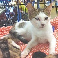 Adopt A Pet :: Skeeter - Cocoa, FL