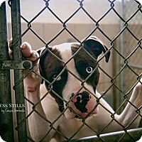 Adopt A Pet :: Bandit - ADOPTED! - Zanesville, OH