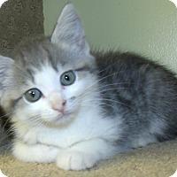 Adopt A Pet :: MIRAGE - Acme, PA