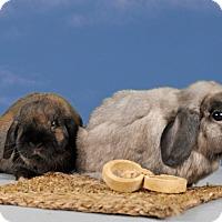 Adopt A Pet :: Billy - Marietta, GA