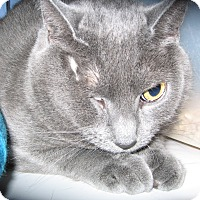 Adopt A Pet :: Rita -Adoption Pending! - Colmar, PA
