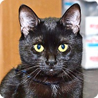 Adopt A Pet :: Licorice - Davis, CA