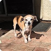 Adopt A Pet :: Pepe - Las Vegas, NV