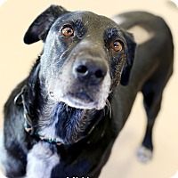 Adopt A Pet :: Lily *FOSTER* - Appleton, WI