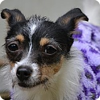Adopt A Pet :: Mea~Adopted! - Troy, OH
