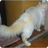 Adopt A Pet :: MauMau - Summerville, SC