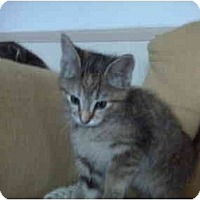 Adopt A Pet :: Holly - Erie, PA