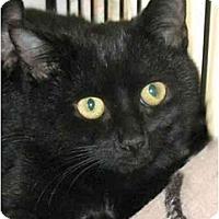 Adopt A Pet :: Dazzle - Plainville, MA