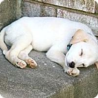 Adopt A Pet :: Percy  *Adopted - Tulsa, OK