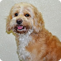 Adopt A Pet :: Oakley - Port Washington, NY