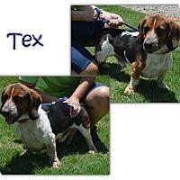 Adopt A Pet :: Tex - Marietta, GA