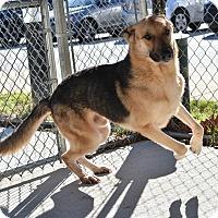 Adopt A Pet :: Roger - Dacula, GA