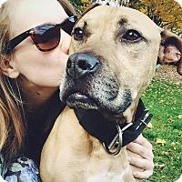 Adopt A Pet :: Bubba - Acushnet, MA