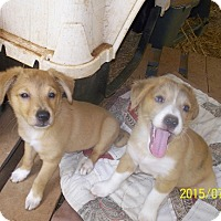 Adopt A Pet :: Mickey and Dickey - Wedowee, AL