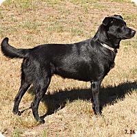 Adopt A Pet :: Drina - Braintree, MA