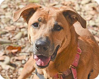 Hound (Unknown Type) Mix Dog for adoption in Asheville, North Carolina - Jasper