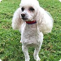 Adopt A Pet :: Ella - Los Angeles, CA