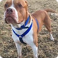 Adopt A Pet :: Leo (Mario) - Saginaw, MI